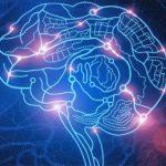 Bionikus agy kifejlesztésére buzdítják az ausztrál tudósokat